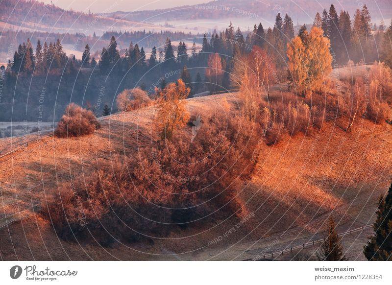 November Morgen in Karpaten Natur Landschaft Sand Luft Wasser Himmel Wolken Sonnenlicht Herbst Wetter Nebel Baum Gras Sträucher Blatt Wiese Feld Wald Hügel