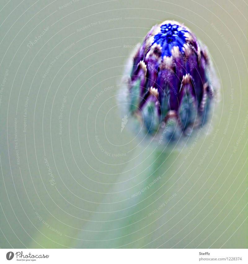 Neuanfang Natur Frühling Pflanze Blume Blüte Frühlingsblume Blühend neu blau Frühlingsgefühle Vorfreude Beginn Erwartung Wandel & Veränderung Entwicklung
