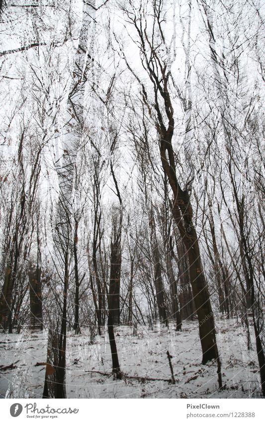 Wald Pflanze weiß Baum Landschaft Tier schwarz Umwelt Traurigkeit Stil Holz außergewöhnlich Park Design Tourismus Wachstum