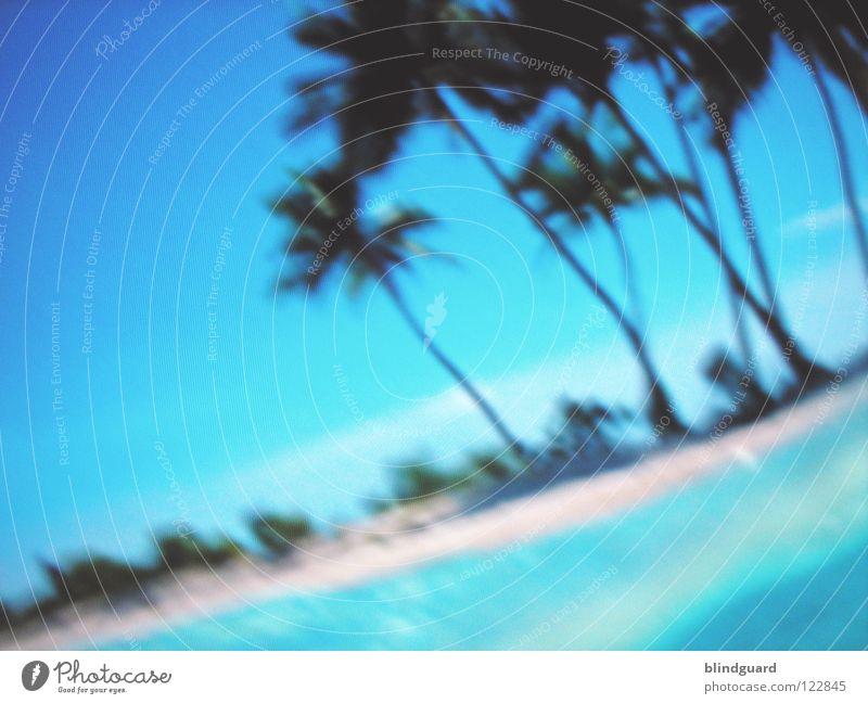 Digital Paradise Wasser Himmel grün blau rot Freude Ferien & Urlaub & Reisen Farbe Insel Technik & Technologie Fernsehen Bild Bildschirm Palme Paradies