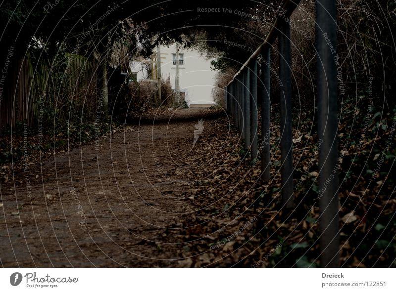 Geh du schonmal voraus...Schatz! Blatt dunkel Licht ruhig Tunnel Tunnelblick gehen Angst Panik Garten Park Wege & Pfade Geländer Loch Perspektive Ende Beginn