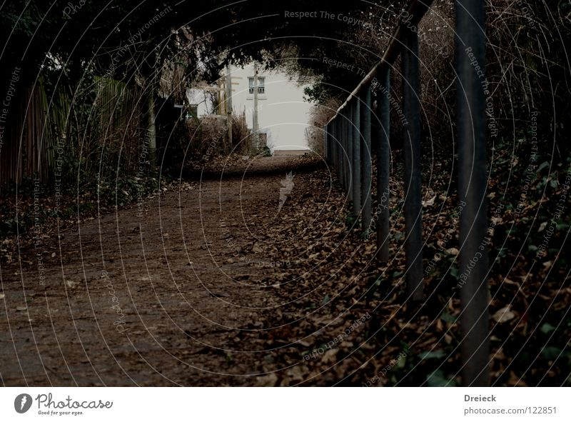 Geh du schonmal voraus...Schatz! Blatt ruhig dunkel Wege & Pfade Garten Park gehen Angst laufen Beginn Perspektive Ziel Ende Geländer schreien Tunnel