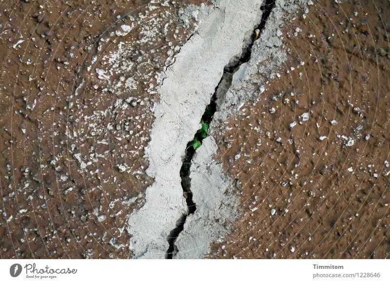 Da tut sich was. Pflanze Blatt Wachstum einfach braun grau grün Gefühle Überraschung Mauer Putz Riss Farbe Außenaufnahme Menschenleer Tag