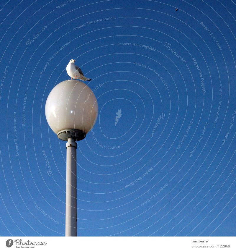 möwe gut laterne gut Himmel blau Sommer Tier Freiheit Küste Lampe Vogel Glas fliegen frei Zoo Laterne Aussicht Verkehrswege Straßenbeleuchtung