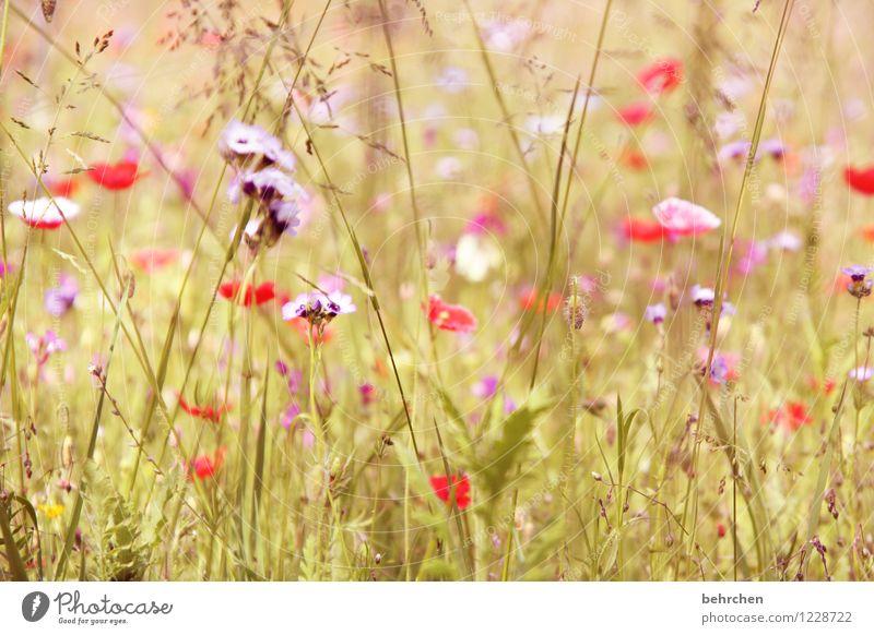moin mo(h)ntag! Natur Pflanze Frühling Sommer Schönes Wetter Blume Gras Blatt Blüte Wildpflanze Mohn Garten Park Wiese Blühend Duft verblüht Wachstum schön