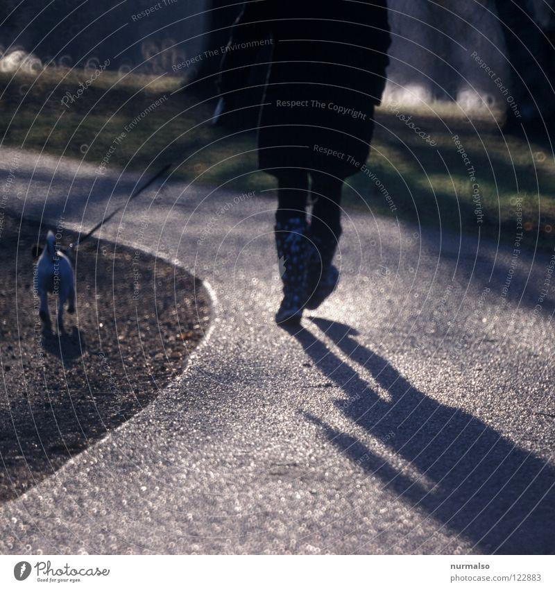 Gassi gehen Hund Ausritt Stiefel Gegenlicht Hundemarke Tier Bösewicht Asphalt Fahrradweg Arbeitsweg Joggen Luft frisch vorwärts Potsdam Spielen Freude