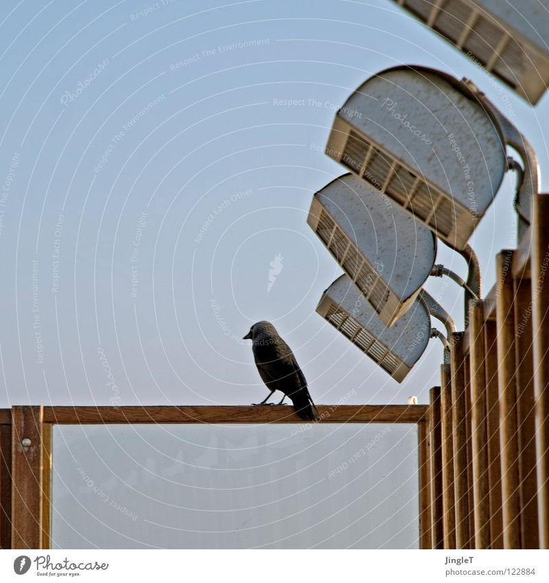 strahlende abendsonne Wetterschutz Holz Holzgestell Meer Strand Abenddämmerung Sonnenuntergang Vogel schwarz Pause Erholung Speiserest Terrasse Niederlande