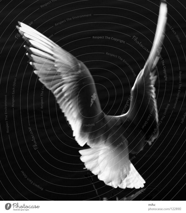 Y? Es un gaviota? Möwe Vogel See Wasser Reflexion & Spiegelung Freiheit Dynamik Schwarzweißfoto