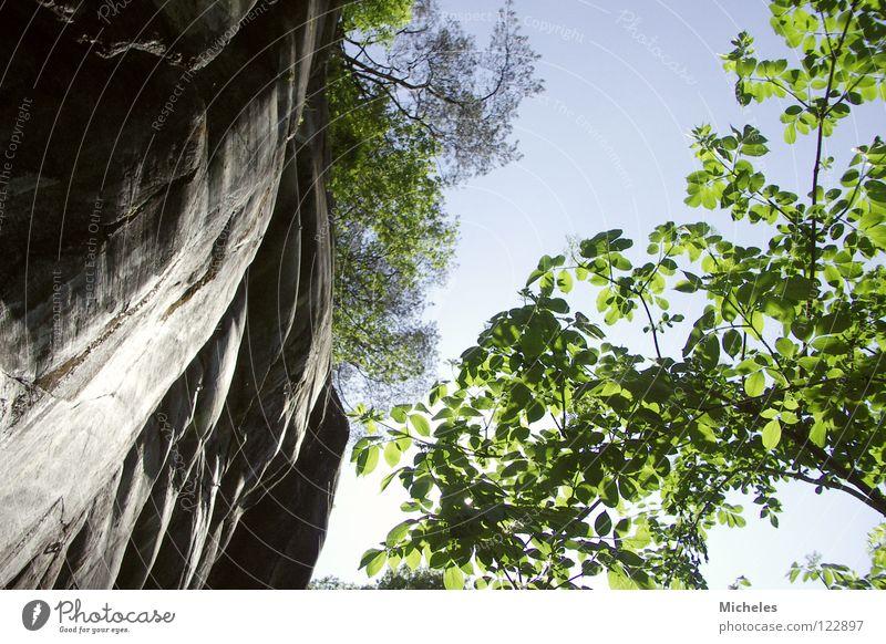 UP Blatt Baum grün Frühling Himmel Felsen blau Stein hell Reflexion & Spiegelung