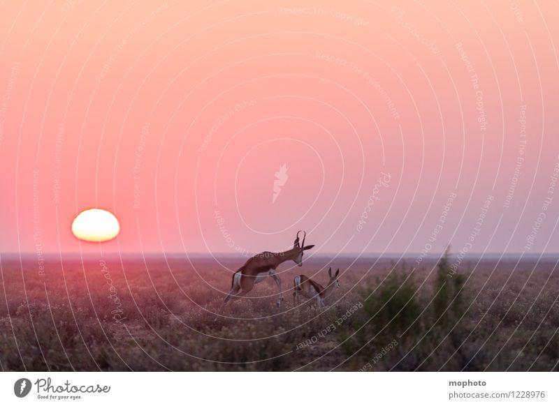 #3 Happy Couple Jagd Ferien & Urlaub & Reisen Tourismus Ferne Safari Umwelt Natur Landschaft Tier Sonne Sonnenaufgang Sonnenuntergang Dürre Sträucher Wüste