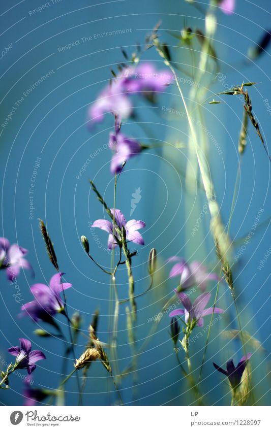 Himmel Natur Pflanze schön Sommer Blume Landschaft Blatt Freude Umwelt Wärme Leben Frühling Gras feminin Zufriedenheit