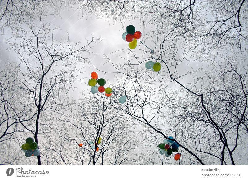 Luftballons Himmel Baum Geburtstag Wolken Party träumen Luft Zufriedenheit Feste & Feiern Jubiläum Luftballon Dekoration & Verzierung stoppen Ast Wunsch Schmuck
