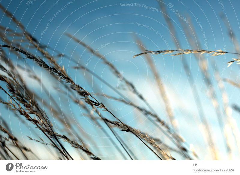 Himmel Natur blau Pflanze schön Sommer Landschaft Winter Umwelt Wärme Frühling Gefühle Herbst Gras Glück Stimmung