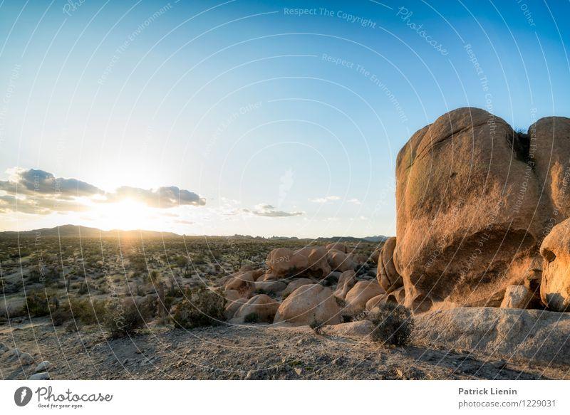 Wüstensonne Wellness Zufriedenheit Sinnesorgane Erholung Ferien & Urlaub & Reisen Tourismus Ausflug Abenteuer Ferne Freiheit Sommer Umwelt Natur Landschaft