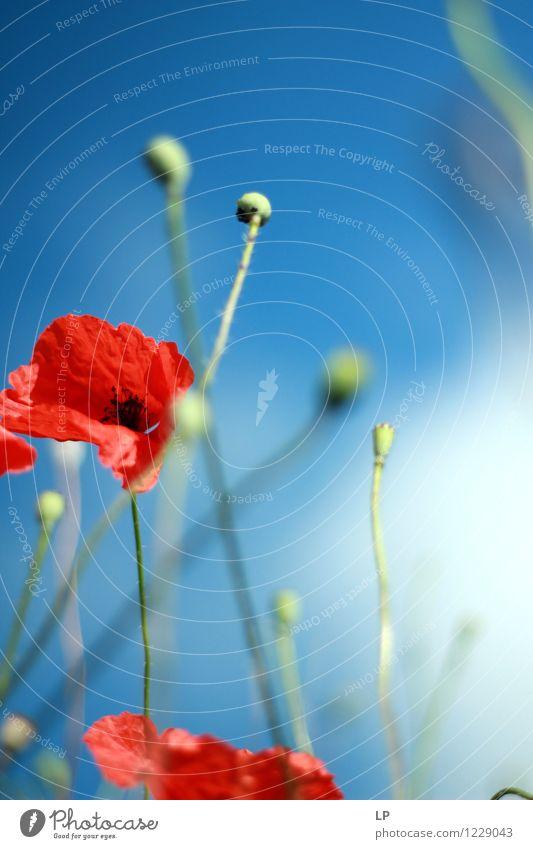 Himmel Natur blau Pflanze schön Sommer Blume rot Landschaft Umwelt Wärme Frühling feminin Zufriedenheit Wetter Luft