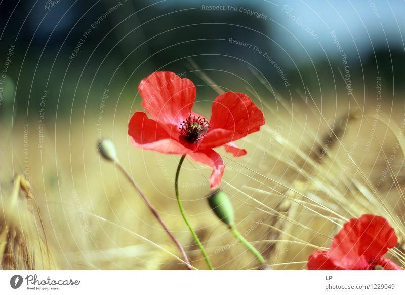 zack Umwelt Natur Landschaft Pflanze Luft Himmel Frühling Sommer Klima Schönes Wetter Blume Blüte Nutzpflanze Wildpflanze Feld frisch Sauberkeit schön