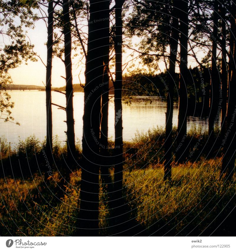 Luleå, Nordschweden Natur Pflanze Sommer Wasser Baum Landschaft ruhig Ferne Wald Umwelt Küste Holz hell Horizont glänzend leuchten