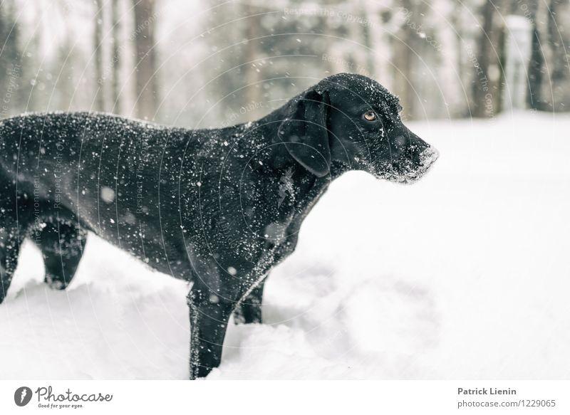 Emma Hund Natur Erholung Einsamkeit Landschaft Tier Freude Winter Wald Umwelt Schnee Freiheit Schneefall Wetter Zufriedenheit Freizeit & Hobby