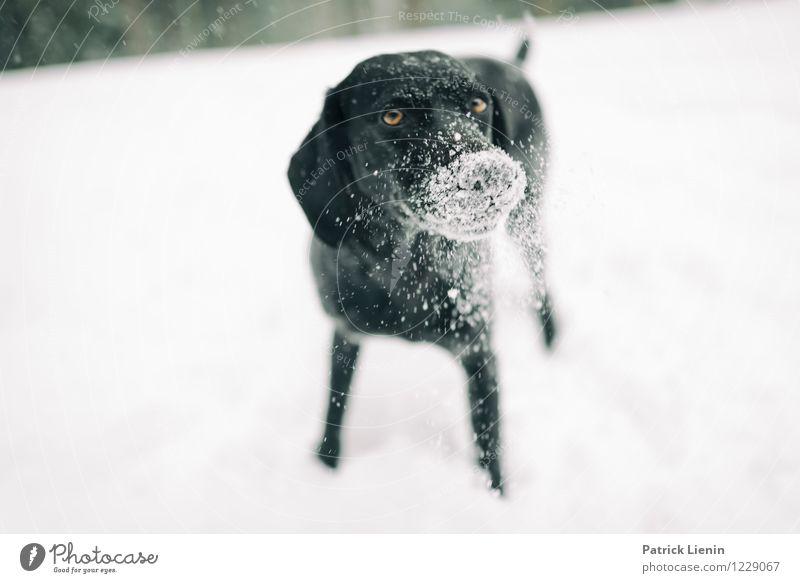 Gepudert Hund Natur Erholung Landschaft Freude Tier Winter kalt Umwelt Schnee Spielen Freiheit Freizeit & Hobby Schneefall einzigartig Abenteuer