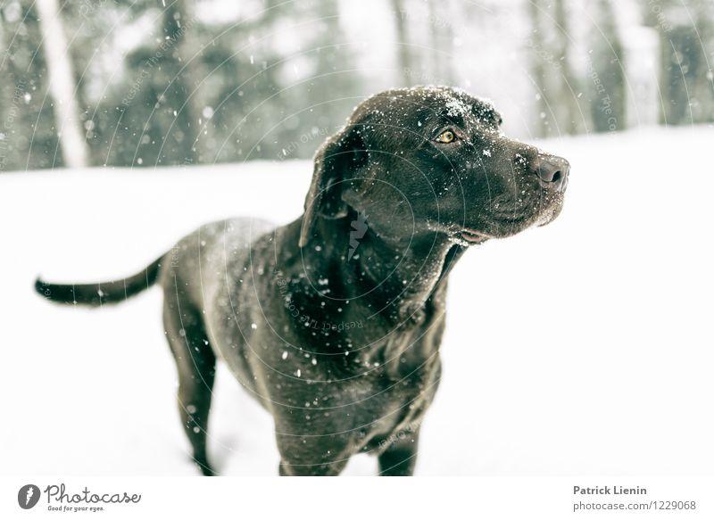 Hazel Hund Natur schön Landschaft Tier Winter Wald Berge u. Gebirge Umwelt Bewegung Schnee Denken Wetter Freizeit & Hobby genießen einzigartig