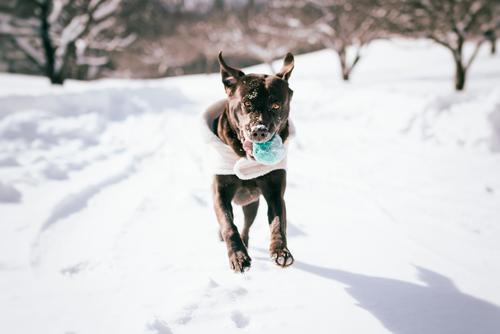 Winterspaß Hund Natur schön Landschaft Tier Freude Umwelt Schnee Gesundheit Spielen Zusammensein Zufriedenheit Eis frisch authentisch