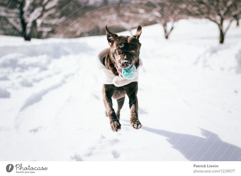 Winterspaß Umwelt Natur Landschaft Urelemente Eis Frost Schnee Tier Haustier Hund 1 authentisch Freundlichkeit Fröhlichkeit frisch Gesundheit Zusammensein schön