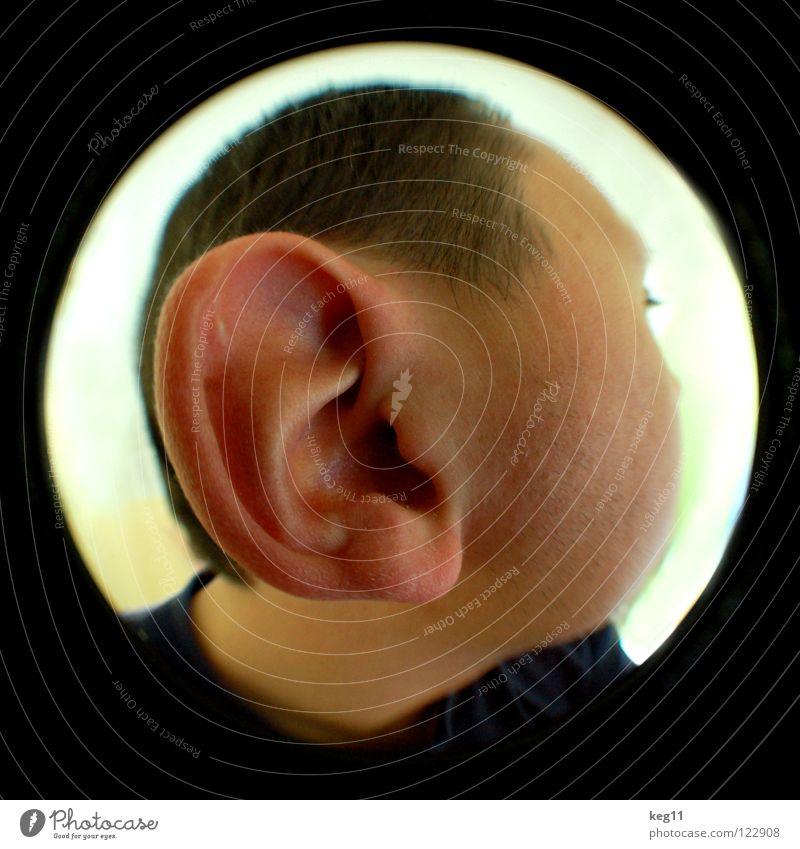 einOHRhasen pt.2|3 Lippen Nasenloch Augenbraue schwarz Wachsamkeit braun hören Sinnesorgane Ohrläppchen Knorpel Innenohr ruhig Fischauge Makroaufnahme
