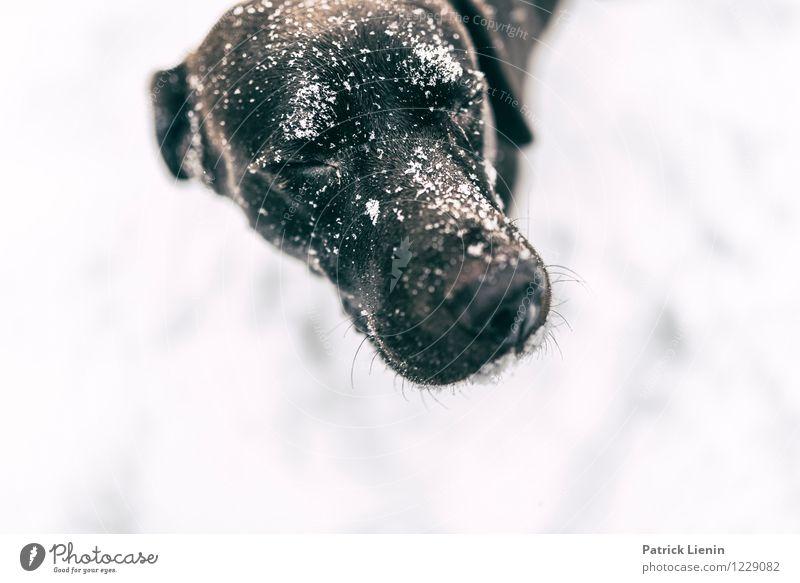Emma Lifestyle Leben harmonisch Wohlgefühl Zufriedenheit Freizeit & Hobby Spielen Winter Schnee Tier Haustier Hund Tiergesicht 1 einzigartig elegant