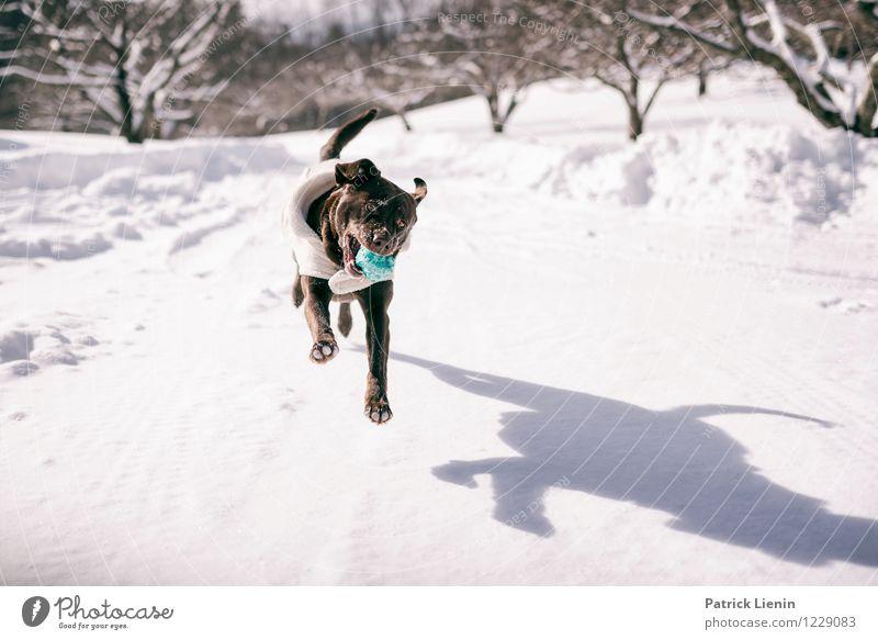 Schattenspiel Hund Natur Landschaft Tier Winter Umwelt Leben Spielen Glück springen Zufriedenheit Freizeit & Hobby Schneefall Ausflug Warmherzigkeit einzigartig