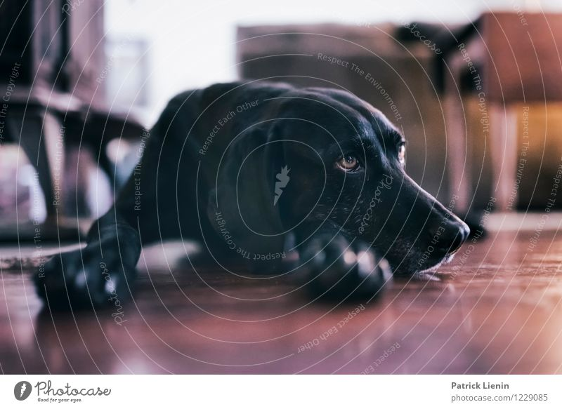 Faulenzen Lifestyle elegant Stil Wellness harmonisch Wohlgefühl Zufriedenheit Sinnesorgane Erholung Tier Haustier Hund Tiergesicht 1 ästhetisch außergewöhnlich
