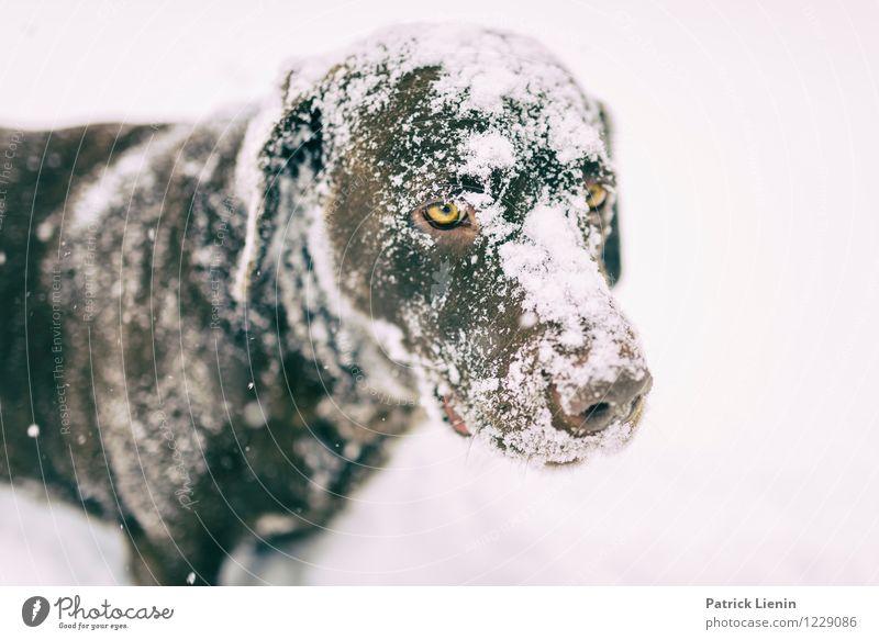 verschneit Freizeit & Hobby Spielen Umwelt Natur Winter Wetter Schnee Schneefall Tier Haustier Hund Tiergesicht 1 beobachten warten schön einzigartig positiv