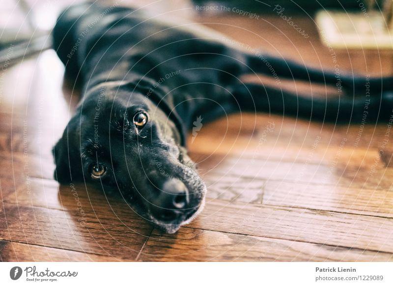 Emma Hund schön Einsamkeit Tier liegen Zufriedenheit Freizeit & Hobby elegant Perspektive ästhetisch einzigartig Pause Boden Neugier Schutz Sicherheit