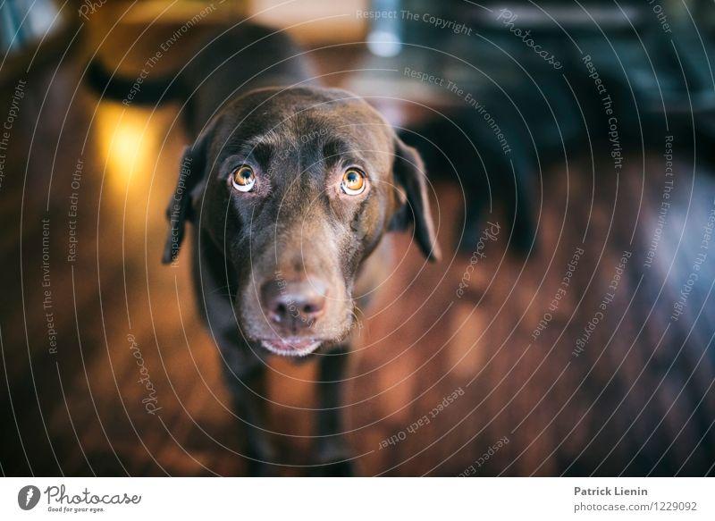 Hazel Tier Haustier Hund Tiergesicht 1 sportlich authentisch schön einzigartig wild weich Verantwortung achtsam Wachsamkeit Freundlichkeit Verlässlichkeit