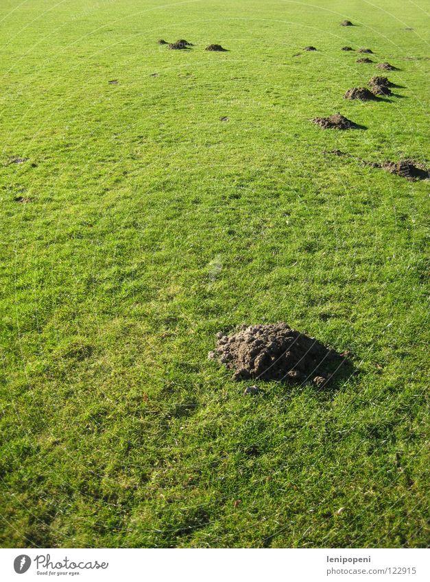 Nicht bespielbar! Wiese Sportplatz Spielen Maulwurf Hügel Gras kurz Feld Erde grün Haufen Tier unten wühlen Höhle Tunnel Rasen Berge u. Gebirge Vogelkolonie