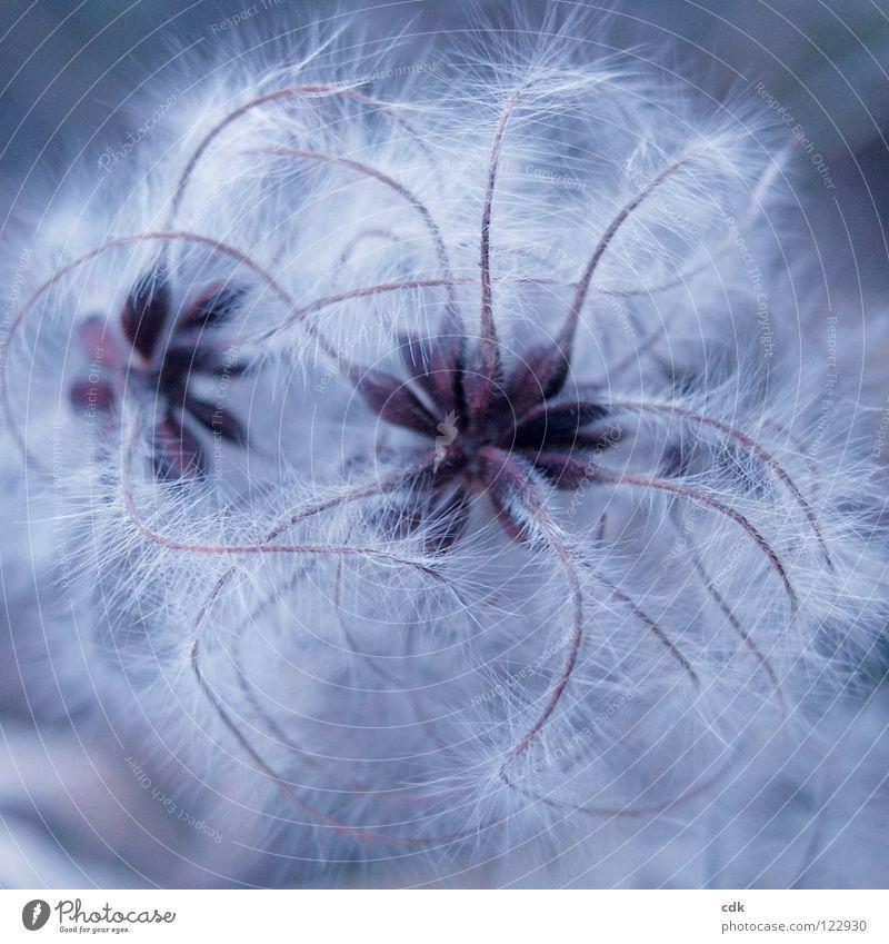 Verwicklungen I Natur Pflanze blau Weihnachten & Advent schön Farbe weiß Winter kalt Herbst Gefühle natürlich Spielen klein Beine braun