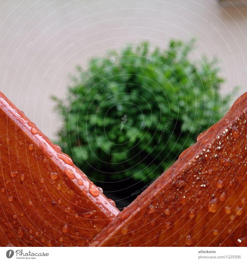 Guckloch Natur Wassertropfen Frühling Sommer Wetter schlechtes Wetter Regen Pflanze Sträucher Grünpflanze Garten Zaun nass braun grün Farbfoto Außenaufnahme