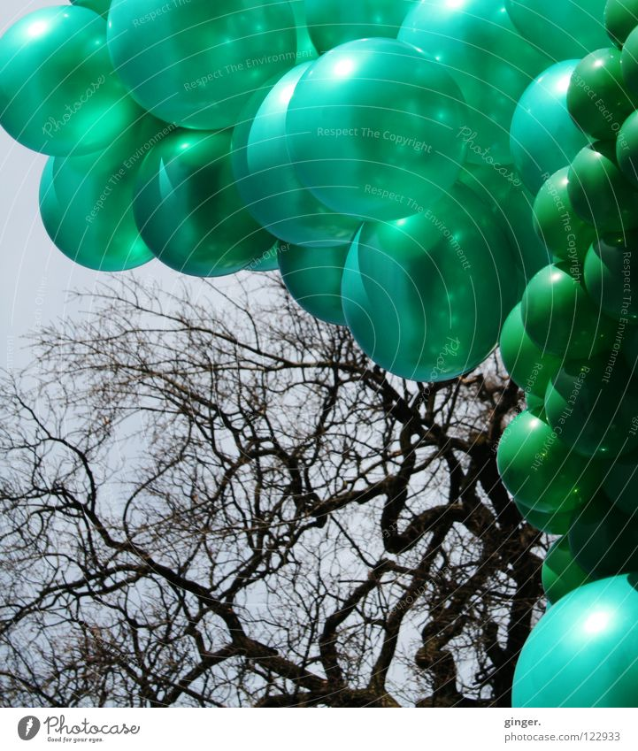 Grüne Ballons vs. Astgeflecht Himmel blau grün Farbe klein groß viele Verschiedenheit Geäst gleich hellgrün eigenwillig dunkelgrün blau-grau zusammengebunden