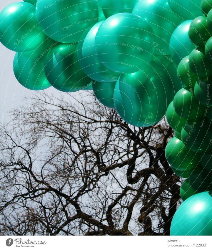 Grüne Ballons vs. Astgeflecht Himmel blau grün Farbe klein groß viele Ast Verschiedenheit Geäst gleich hellgrün eigenwillig dunkelgrün blau-grau zusammengebunden