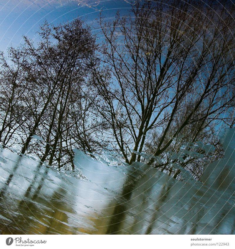 Sicht von unten Wasser Himmel Baum blau Winter kalt Frühling See Eis braun nass Ast Spiegel Quadrat Ekel