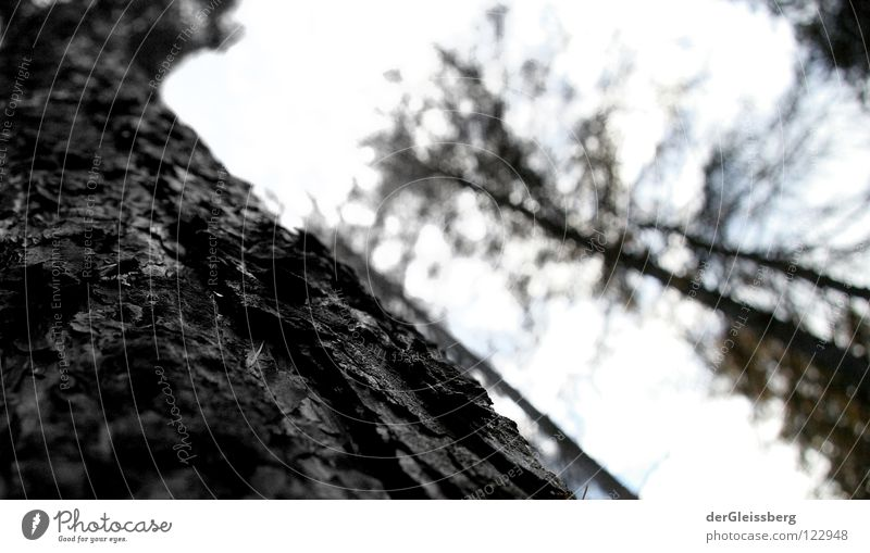 Die Zeichen der Zeit Baum grün ruhig Wald Leben dunkel Holz hell Kraft Wetter Energiewirtschaft stehen Baumrinde standhaft