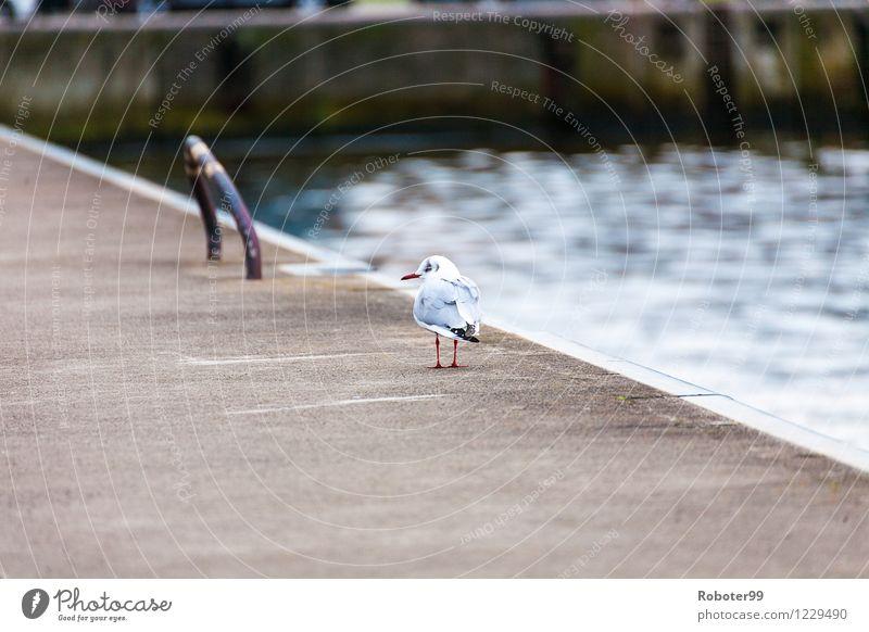 Spazierende Möve Einsamkeit Tier Vogel Angst Wildtier Beton Schmerz Stahl Hafenstadt demütig