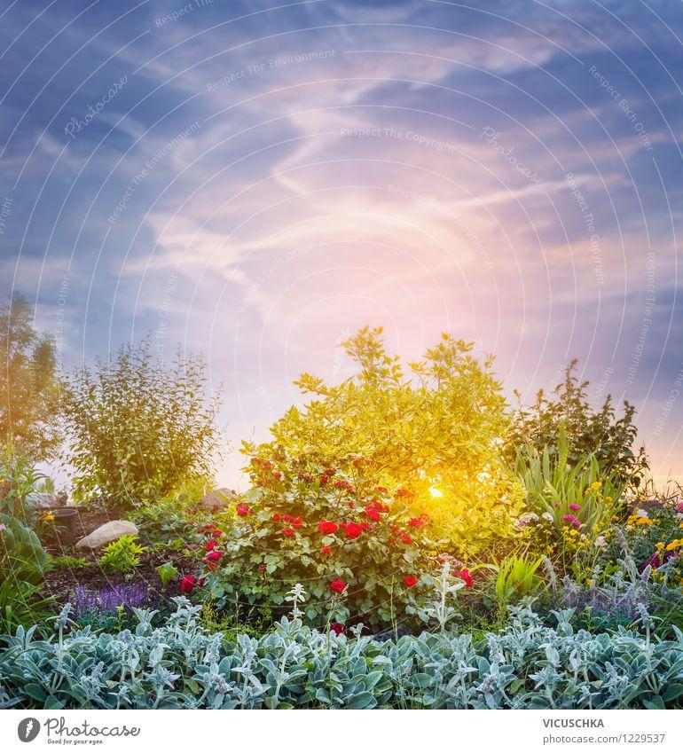 Sonnenuntergang im Garten Himmel Natur Pflanze Himmel (Jenseits) Sommer Blume gelb Herbst Frühling Hintergrundbild rosa Design Park Sträucher Schönes Wetter