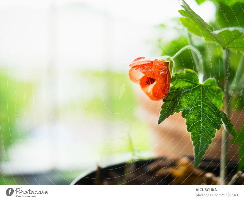 Die Feuerrote Blume Lifestyle Design Garten Dekoration & Verzierung Pflanze Frühling Sommer Blatt Blüte Blumenstrauß Natur Balkonpflanze Topfpflanze