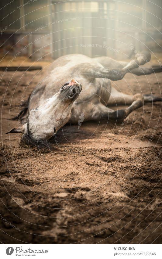 Pferd wälzt sich im Sand Natur Sommer Freude Tier Frühling Herbst Gebäude Lifestyle Stimmung Kopf liegen träumen Zufriedenheit Aktion Kraft