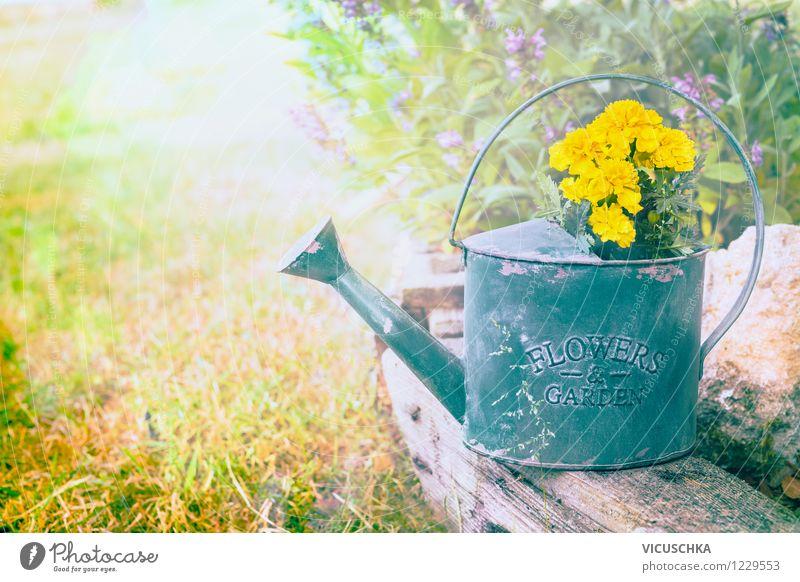 Alte Giesskanne mit Gartenblumen Design Sommer Traumhaus Natur Pflanze Frühling Herbst Schönes Wetter Blume Blatt Blüte Blumenstrauß retro gelb Hintergrundbild