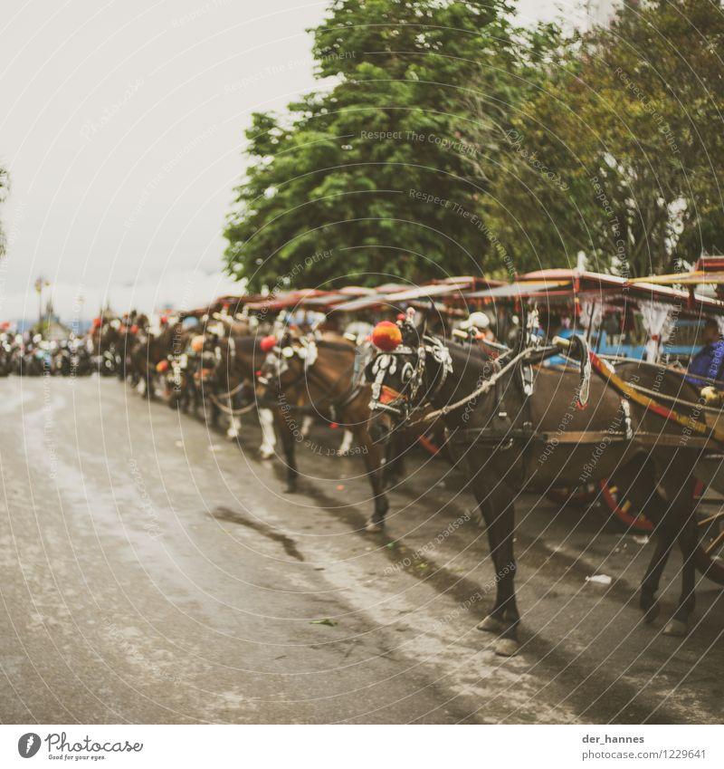 hühopp.102 Reiten schlechtes Wetter Verkehrsmittel Pferdekutsche Tiergruppe Herde Ferien & Urlaub & Reisen alt Indonesien Sumatra Gedeckte Farben Außenaufnahme