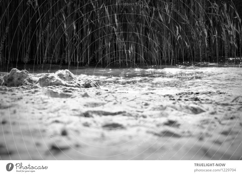 Schilf, Wasser und Sand harmonisch Erholung ruhig Schwimmen & Baden Ferien & Urlaub & Reisen Ausflug Sommerurlaub Sonnenbad Strand Wellen Natur Landschaft