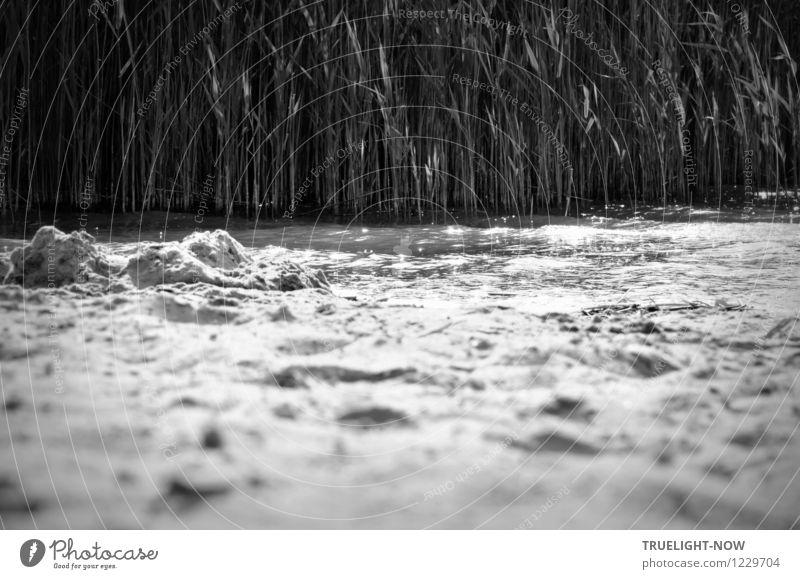 Schilf, Wasser und Sand Natur Ferien & Urlaub & Reisen Pflanze Sommer weiß Erholung Landschaft ruhig Strand schwarz grau Schwimmen & Baden Wellen Ausflug
