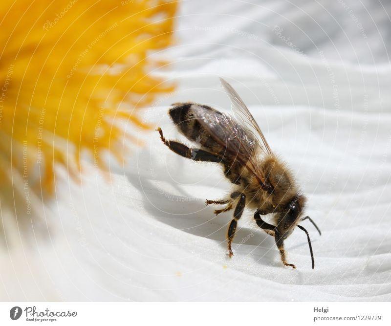 Gymnastik... Umwelt Natur Pflanze Tier Sommer Schönes Wetter Blume Blüte Garten Biene 1 Blühend krabbeln außergewöhnlich Krankheit natürlich braun gelb schwarz