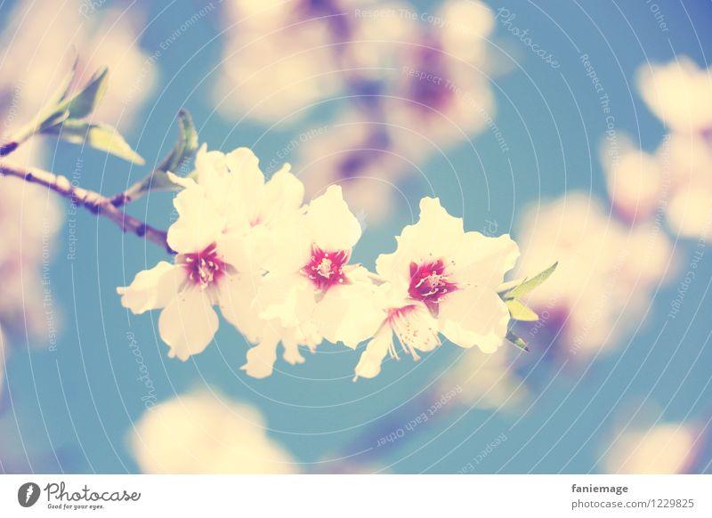 soft cherry blossom Natur blau Pflanze schön weiß Reisefotografie Frühling Blüte rosa Blühend weich Schönes Wetter Romantik zart Zweig Duft